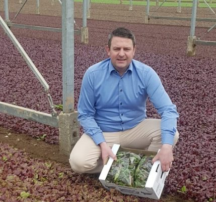Blackdown Growers – Expert baby leaf grower