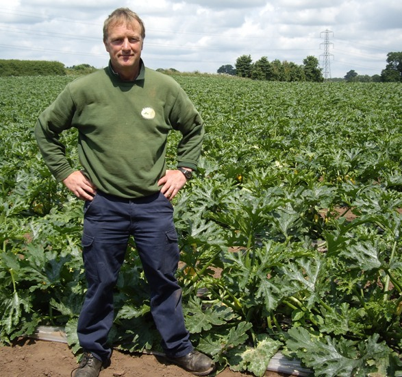 D Southall and Sons – Expert courgette grower